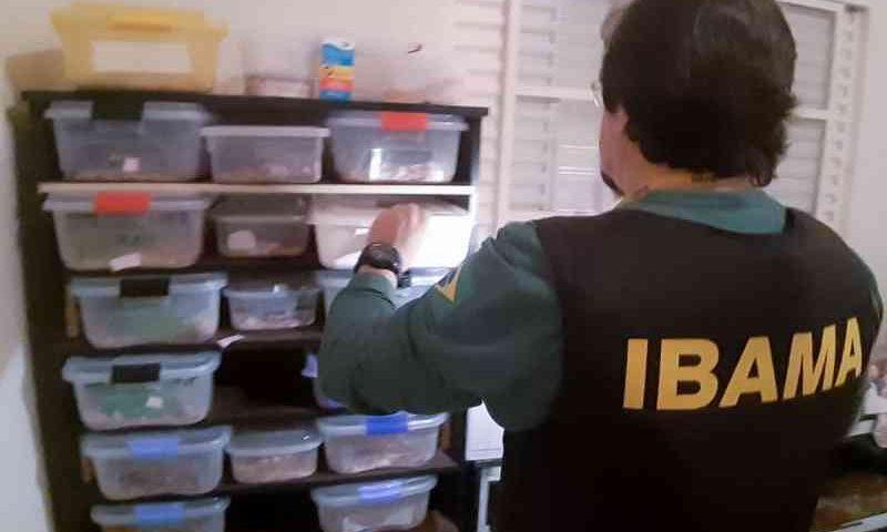 Ibama e PM Ambiental apreendem 193 animais silvestres em SP