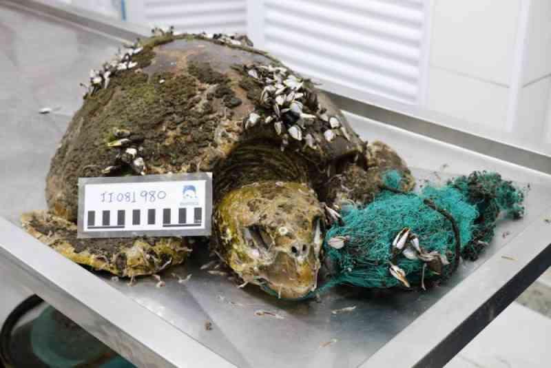 Animais marinhos são encontrados com resíduos presos ao corpo em SP