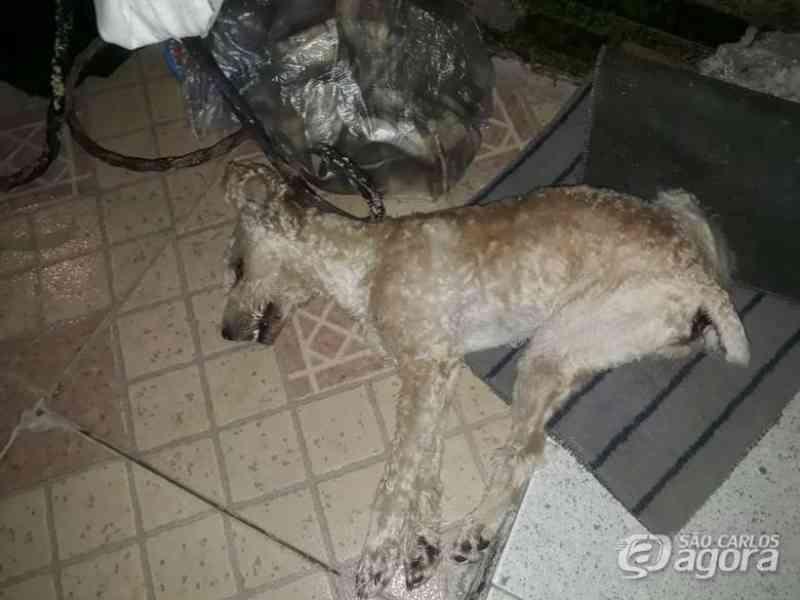 Final de semana é marcado pelo envenenamento de três cães em São Carlos, SP