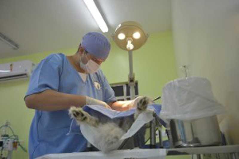 Mais um mutirão de castrações está programado para esta sexta-feira pela quarta fase do programa Meu Pet Feliz – Foto: Lucas Cabral/PMSJC