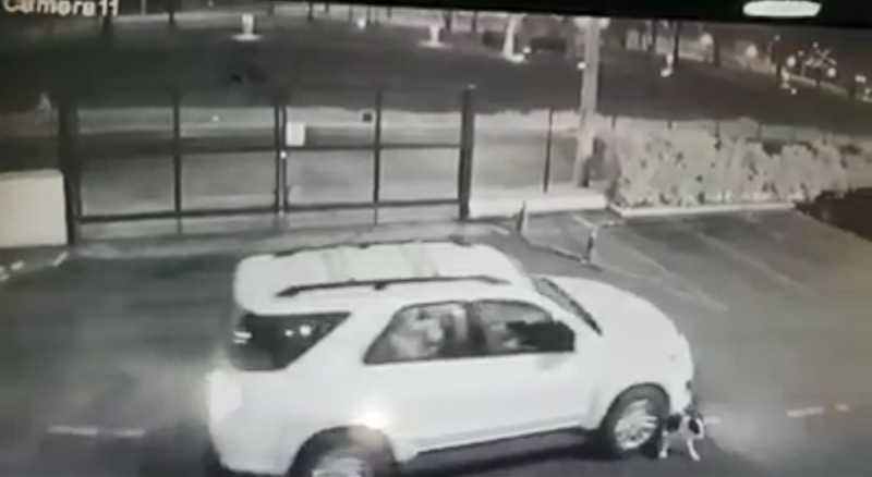 Cadela é atropelada por veículo em estacionamento de shopping em Catanduva — Foto: Reprodução/Circuito de segurança
