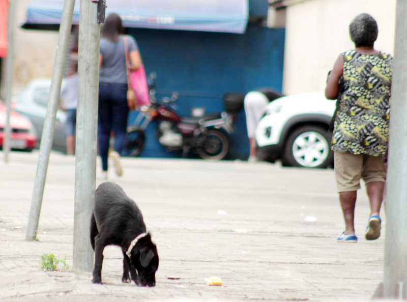 Cubatão (SP) terá Disque-Denúncia contra maus-tratos a animais