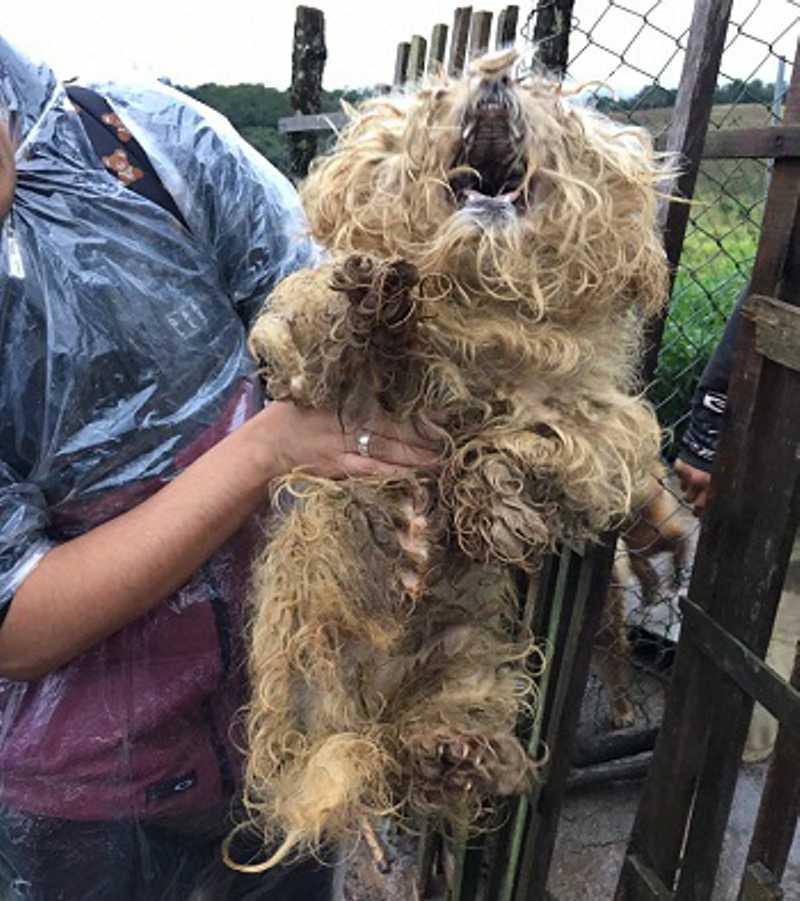 Polícia resgata animais vítimas de maus-tratos em canil clandestino de Ibiúna, SP