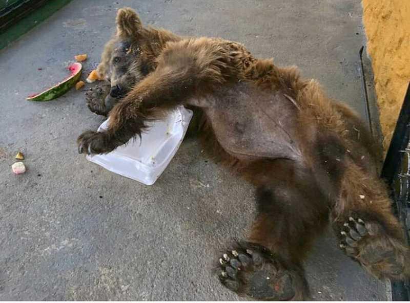 Ursa Rowena tinha frutas na dieta de alimentação em Joanópolis — Foto: Reprodução/ Instagram