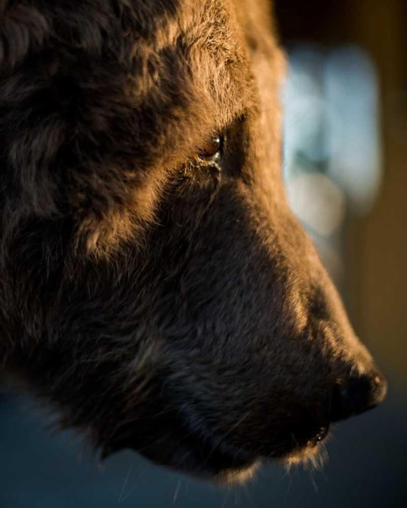 Ursa Rowena morre em santuário de animais no interior de SP — Foto: Biga Pessoa/ Rancho dos Gnomos