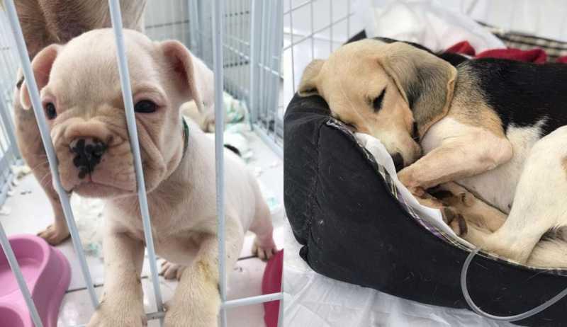 Animais foram resgatados de canil em Piedade e passaram por tratamento — Foto: Arquivo pessoal