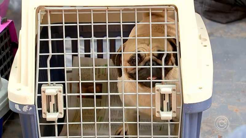 Animais foram resgatados de canil em Piedade — Foto: Reprodução/TV TEM