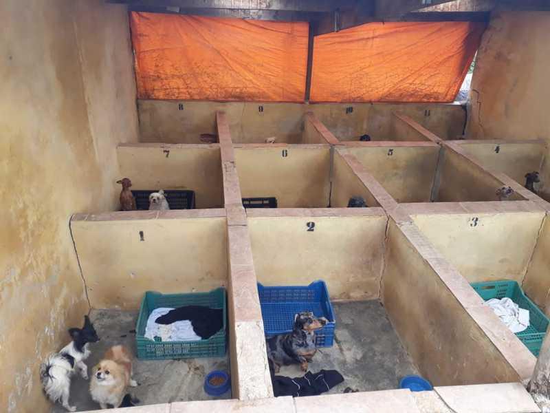 Polícia encontrou canil com cães em situação de maus-tratos em Piedade — Foto: Divulgação/PM