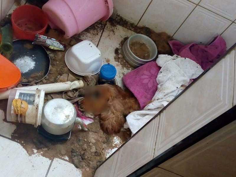 Cachorro foi abandonado e encontrado morto em apartamento de Praia Grande, SP — Foto: Reprodução/Praia Grande Mil Grau