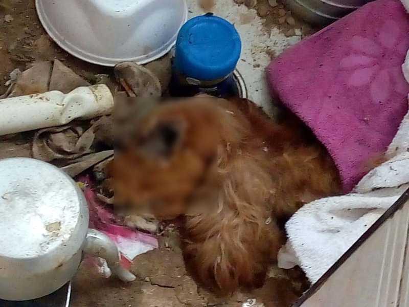De acordo com um dos administradores do prédio, animal morreu de fome em Praia Grande, SP — Foto: Reprodução/Praia Grande Mil Grau