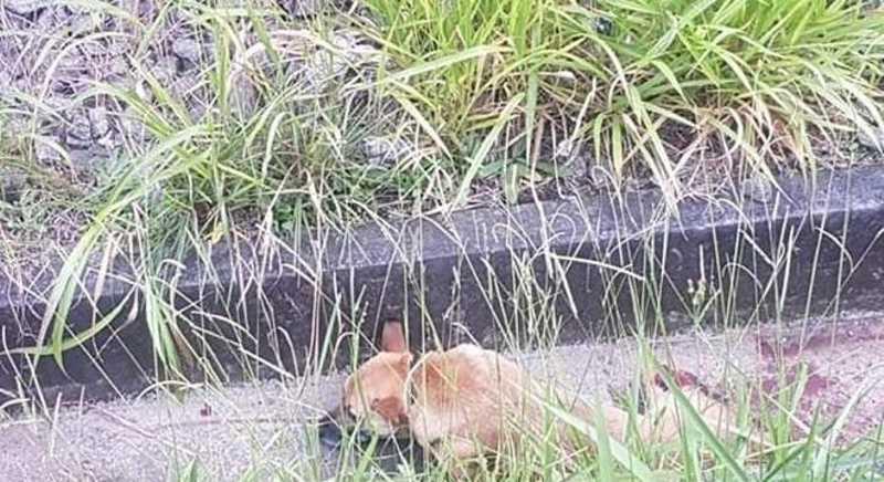 Cachorro foi atropelado por trem na estação Grajaú, da CPTM, em SP Reprodução Facebook Grajaú Tem
