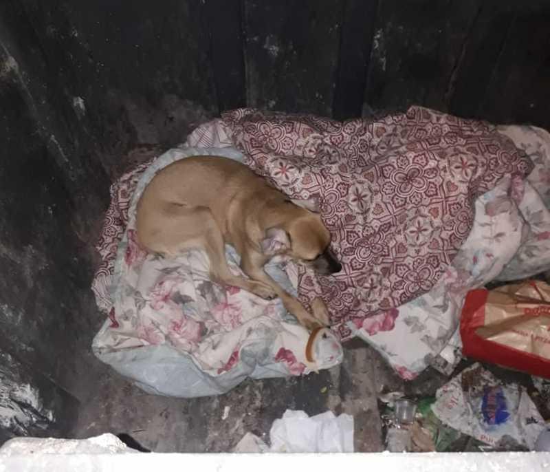 Animal foi retirado pela PM de contêiner em Sorocaba — Foto: Arquivo pessoal