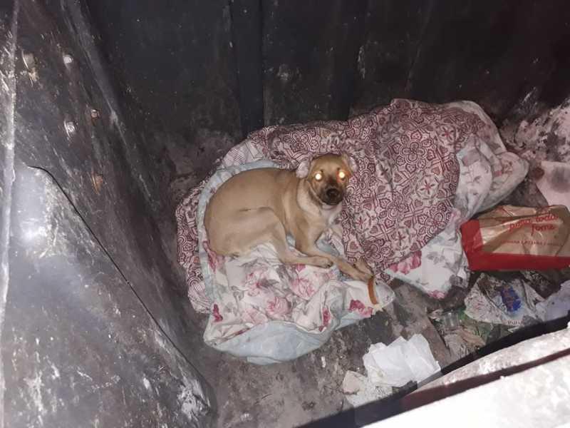 Cachorro é retirado de contêiner em Sorocaba — Foto: Arquivo pessoal