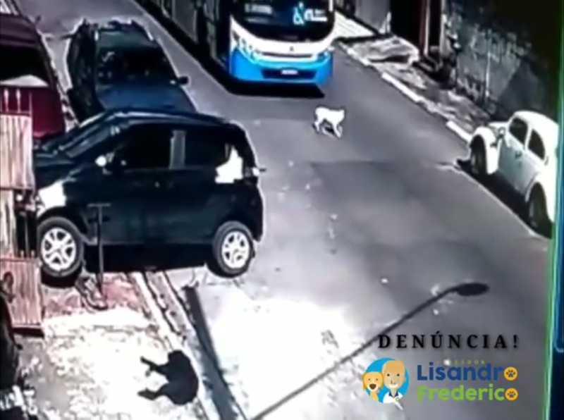 Vídeo de atropelamento proposital de cachorro por ônibus gera revolta em Suzano, SP