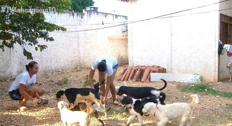 Animais são resgatados com dinheiro da venda de latinhas — Foto: Reprodução/TV Anhanguera