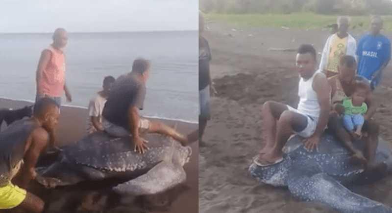 Em vídeo divulgado nas redes sociais, os banhistas sobem no animal e posam para a câmera (Reprodução/NE10 Interior)