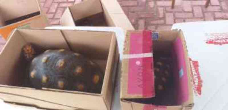 População pode fazer entrega voluntária de animais silvestres sem sofrer punição em Alagoas