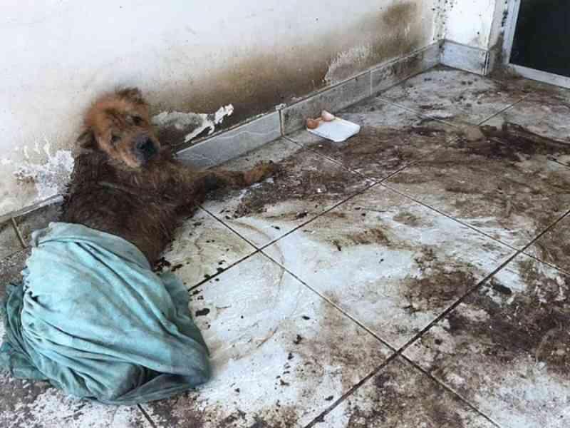 Polícia Civil e comissão da OAB investigam abandono de animais em casa no bairro Poço, em Maceió