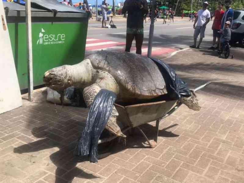 Tartaruga 'gigante' é encontrada morta na orla de Ponta Verde em Maceió, AL