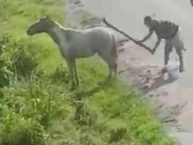 VÍDEO: Homem agride cavalo na cidade de São Miguel dos Campos, AL