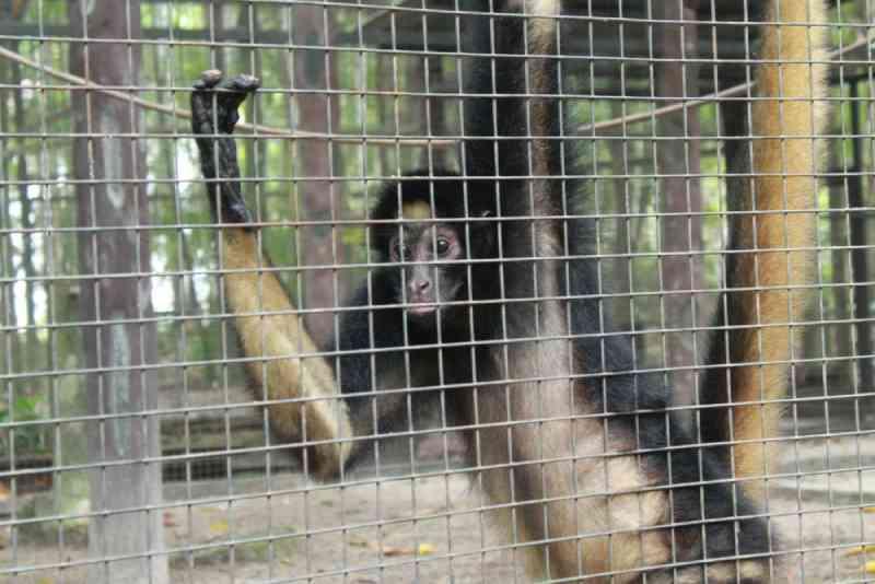 Zoológico de hotel de luxo desativado é notificado e deve comprovar orçamento para alimentar 230 animais, no AM