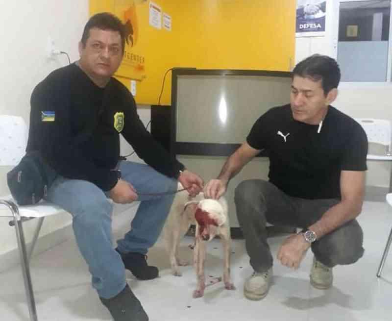 Cachorro leva terçadada após caso de ameaça; policiais pagaram tratamento para o animal, no AP