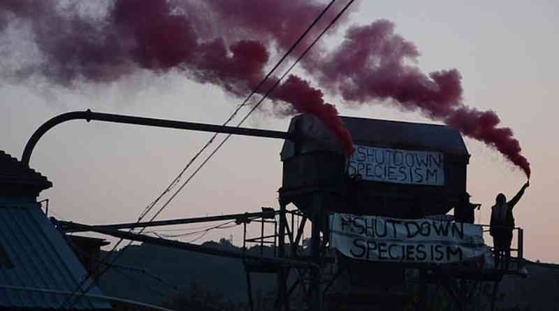 Ativistas ocupam matadouro e se acorrentam a máquinas dizendo que só sairão se ovelhas forem entregues a um santuário
