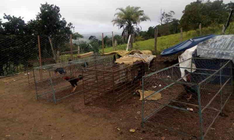 Após denúncia, PM flagra rinha de galos com mais de 50 aves em Amargosa, BA