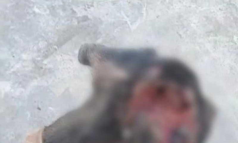 Cachorro é resgatado após ser violentamente agredido em Caetité, BA; animal não sobrevive