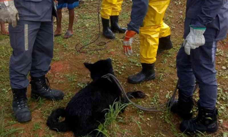 Cachorro cai em córrego e é resgatado pelo Corpo de Bombeiros em Salvador, BA