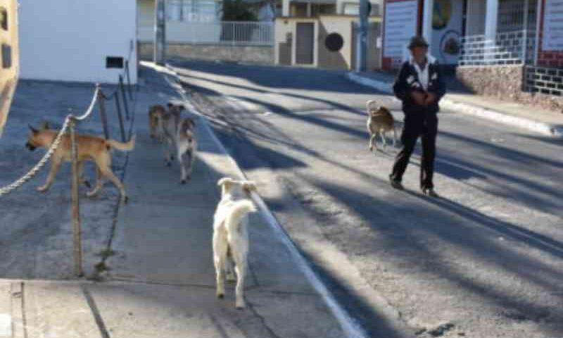 Situação Complicada: mais de 1 mil animais abandonados vivem nas ruas de Vitória da Conquista, BA