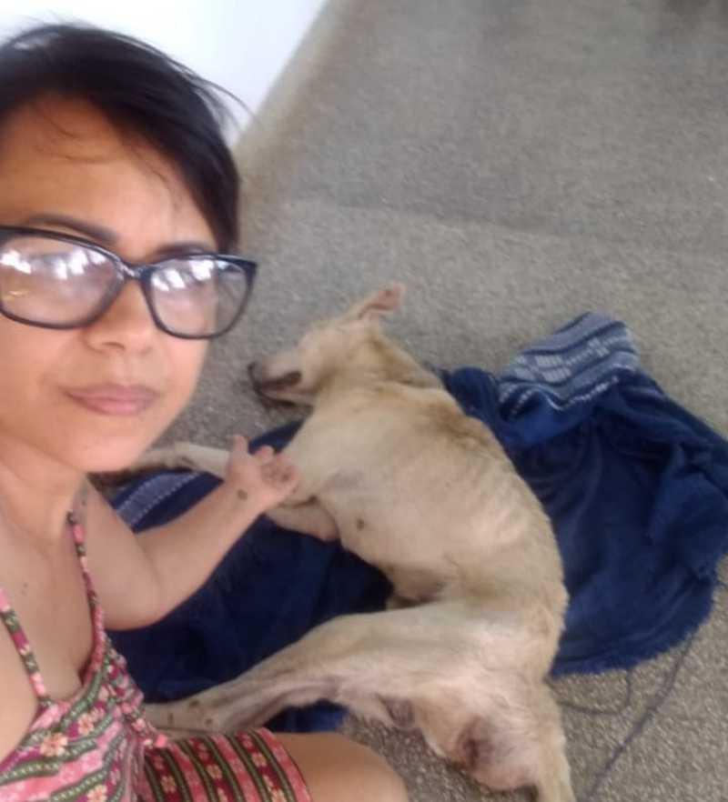 Cão morre nos braços de protetora após ser vítima de abandono e maus-tratos em Cruz das Almas, BA