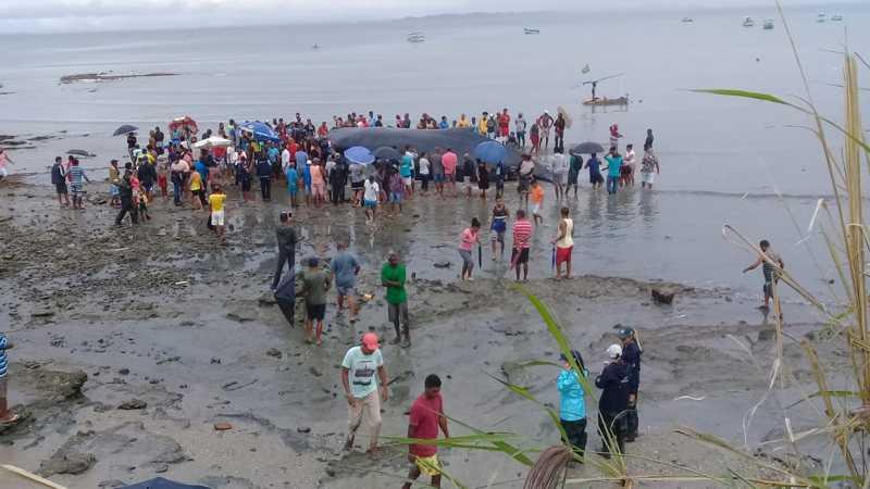Moradores da região de Coutos, em Salvador, ao redor da baleia encalhada em Salvador — Foto: Cid Vaz/TV Bahia