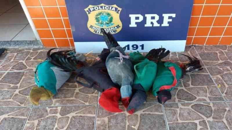PRF detém dois homens transportando animais para rinha de galos, em Sobral, CE