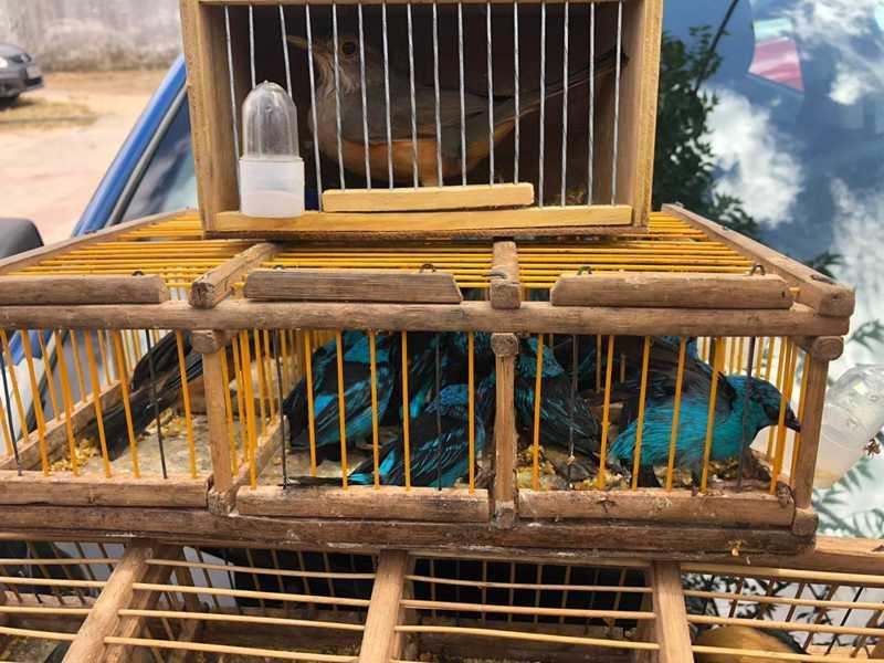Pássaros foram encontrados presos em gaiolas sujas e apertadas, sem reservatórios de água e alimento. — Foto: Guarda Municipal/ Divulgação