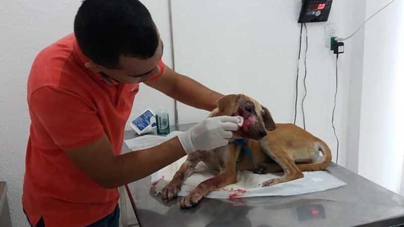Cachorra é agredida a pedradas em Quixeramobim, no Ceará. Reprodução/Resgate Animal