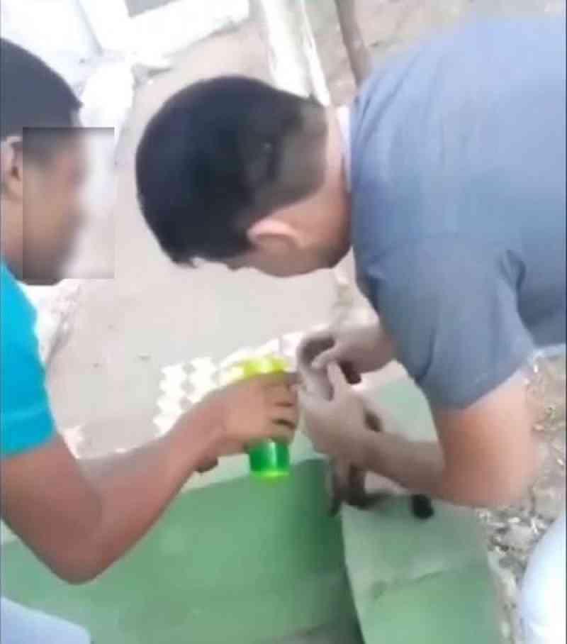 Suspeitos de forçar gato a tomar bebida alcoólica são ouvidos em delegacia, no Ceará