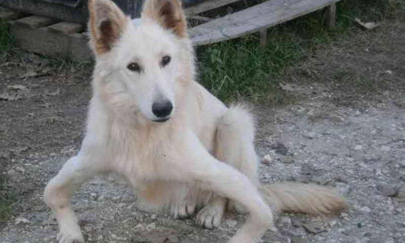 Cadela de patas tortas voou da Grécia para a Inglaterra em um resgate de uma vida