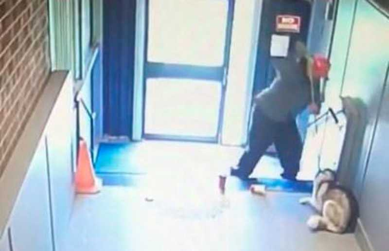 Homem é condenado por crueldade animal por danos psicológicos a cadela; vídeo