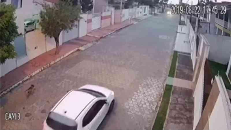 'Não há dúvidas de que ele foi o autor do disparo', diz deputada sobre suspeito de matar cachorro em São Mateus, ES