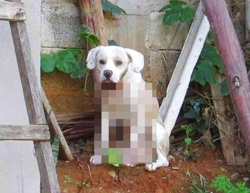 Após tutora ser morta, policiais fazem vaquinha para salvar cachorro baleado em Vila Velha, ES