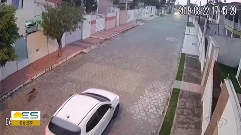 Cachorro é perseguido e morto a tiros em São Mateus, ES; vídeo