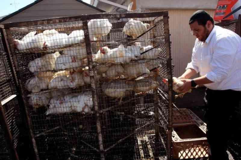 Centro judaico processou ritual polêmico de matança de galinha