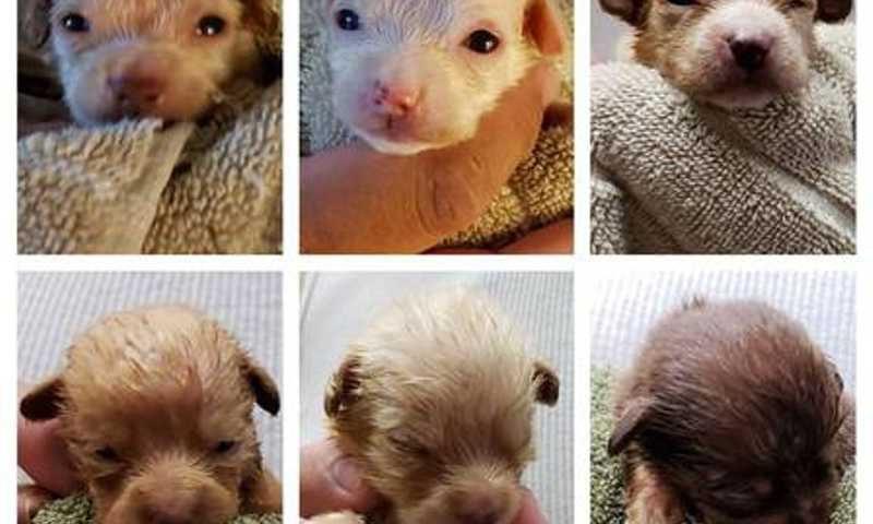 Filhotinhos foram jogados fora por mulher na Califórnia. Foto: Riverside County Animal Services