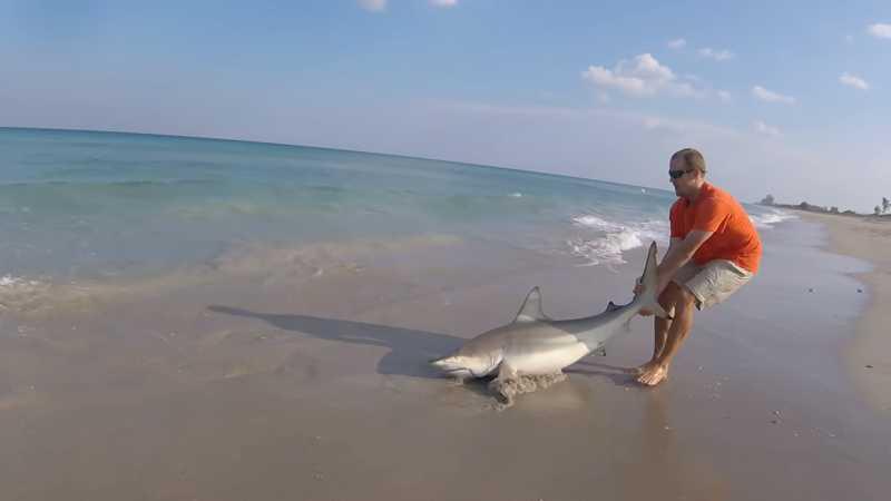 Homem heroico mergulha no mar para socorrer tubarão emaranhado em linha de pesca