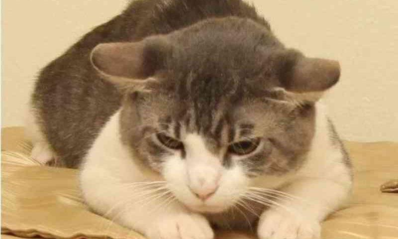 Norte-americano acusado de drogar gato com metanfetaminas