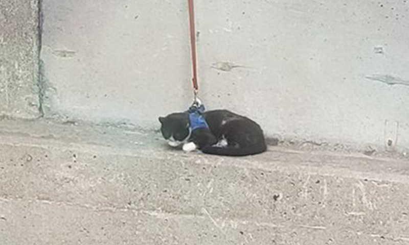 Gato com coleira preso na beirada da ponte