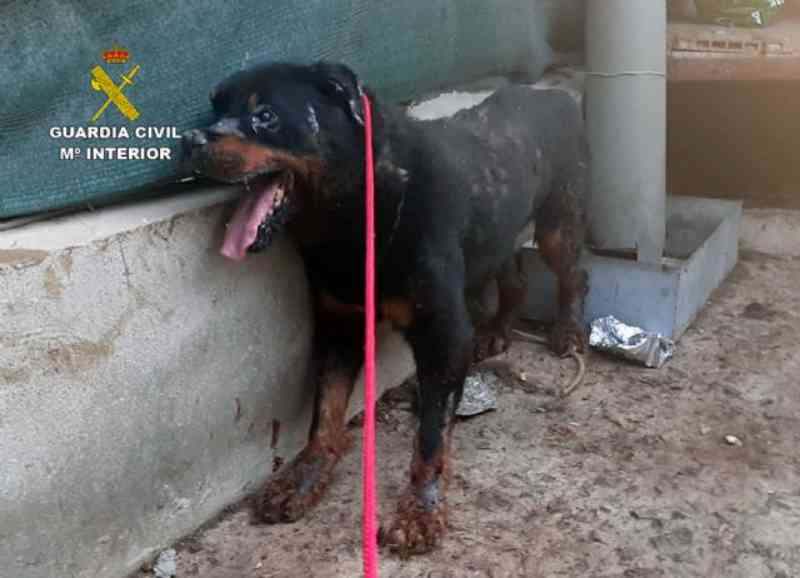 Guarda Civil espanhola resgata 'in extremis' um cão em estado de abandono de uma casa de Santomera