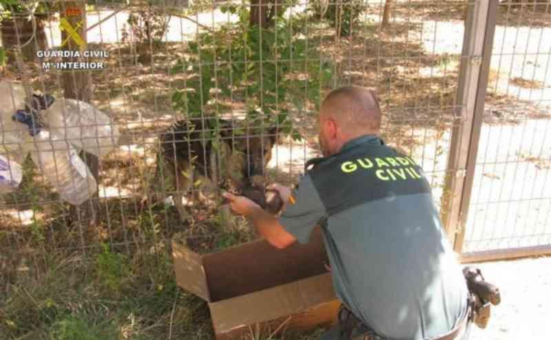 Polícia resgata pastores alemães que tinham sido enterrados vivos, na Espanha