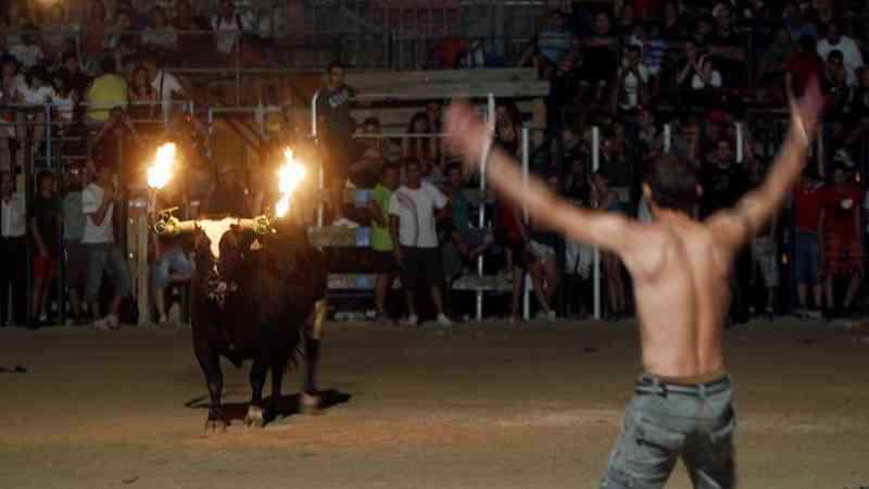 ONGs francesas querem pôr um fim à tradição espanhola de colocar fogo nos chifres de touros